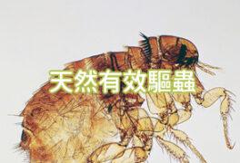 天然有效的驅蟲